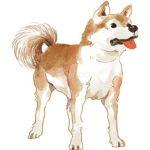 世界で秋田犬ブーム到来!?世界中で秋田犬ブームが起こったきっかけは何?