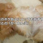 老犬のボケ防止にとってもおすすめ!愛犬との「かくれんぼ」